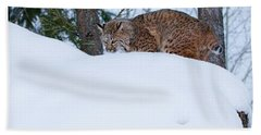 Bobcat On Snow Hill Hand Towel by Steve McKinzie