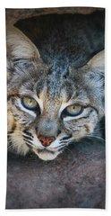 Bobcat Stare Hand Towel