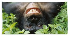 Bath Towel featuring the photograph Bonobo Smiling by Cyril Ruoso