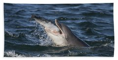Bottlenose Dolphin Eating A Salmon - Scotland #5 Hand Towel