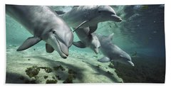 Four Bottlenose Dolphins Hawaii Hand Towel