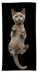 Bottom View Of Kitten Hand Towel