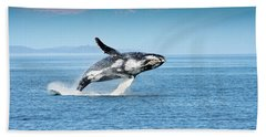 Breaching Humpback Whales Happy-4 Hand Towel