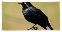 Brewers Blackbird Resting On Log Hand Towel