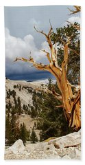 Bristlecone Pine Tree 8 Hand Towel