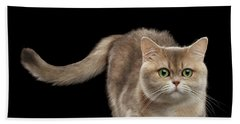 Brittish Cat With Curve Tail On Black Bath Towel