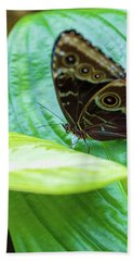 Brown And Blue Butterfly Hand Towel