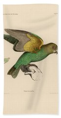 Brown-headed Parrot, Piocephalus Cryptoxanthus Bath Towel