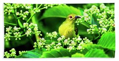 Brown Neck Sunbird Hand Towel