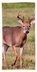 Hand Towel featuring the photograph Buck by Debbie Stahre