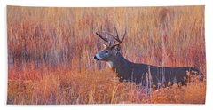Buck Deer In Morning Sunlight Bath Towel