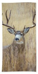 Buck In Snow Hand Towel