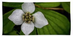 Hand Towel featuring the photograph Bunchberry Dogwood On Gloomy Day by Darcy Michaelchuk