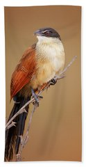 Burchell's Coucal - Rainbird Hand Towel