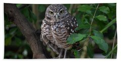 Burrowing Owl Color Version Hand Towel