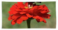 Butterfly On Red Zinnia Bath Towel