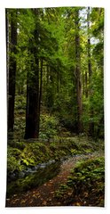 By The Stream In Muir Woods Hand Towel