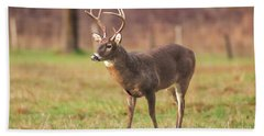 Hand Towel featuring the photograph Cades Cove Buck by Geraldine DeBoer