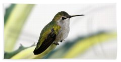 Calliope Hummingbird On Agave Bath Towel