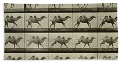 Camel Hand Towel by Eadweard Muybridge