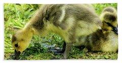 Canada Goose Gosling Bath Towel by Gary Whitton