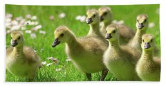 Hand Towel featuring the photograph Canada Goose Goslings by Sharon Talson