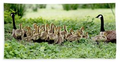 Hand Towel featuring the photograph Canada Gosling Daycare by Rona Black