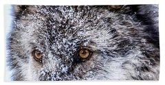 Canadian Grey Wolf In Portrait, British Columbia, Canada Bath Towel