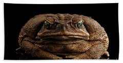 Cane Toad - Bufo Marinus, Giant Neotropical Or Marine Toad Isolated On Black Background, Front View Bath Towel