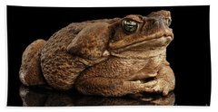 Cane Toad - Bufo Marinus, Giant Neotropical Or Marine Toad Isolated On Black Background Bath Towel