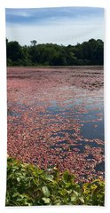Cape Cod Cranberry Bog Hand Towel by Beth Saffer
