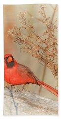 Cardinal In Fall  Bath Towel