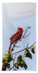 Hand Towel featuring the photograph Cardinal On Treetop by Robert Frederick