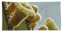 Hand Towel featuring the photograph Cardon Cactus Flowers by Marilyn Smith