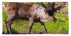 Caribou Antlers In Velvet Bath Towel by Allan Levin