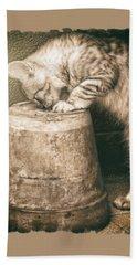 Cat Curiosity... Hand Towel