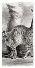 Cat In An Affectionate Frame Of Mind Bath Towel