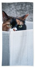 Hand Towel featuring the photograph Cat In The Box by Laura Melis