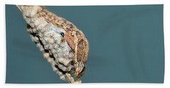 Caterpillar And Parasitic Wasp/eggs Hand Towel