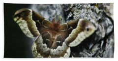 Cecropia Moth Hand Towel