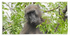 Chacma Baboon Hand Towel by Betty-Anne McDonald