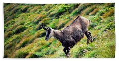 Chamois On A Sloping Hillside Hand Towel