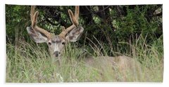 Bath Towel featuring the photograph Chasing Velvet Antlers 2 by Natalie Ortiz