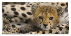 Cheetah Cub Portrait Hand Towel