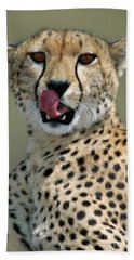 Cheetah Licking  Hand Towel