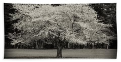 Cherry Blossom Tree - Ocean County Park Hand Towel