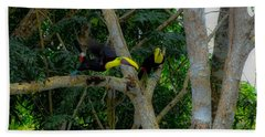Chestnut-mandibled Toucans Bath Towel