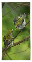 Chestnut-sided Warbler Being Fed Bath Towel by Alan Lenk