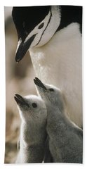 Chinstrap Penguin Pygoscelis Antarctica Bath Towel