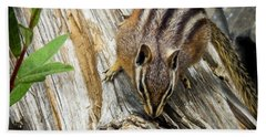 Chipmunk On A Log Hand Towel